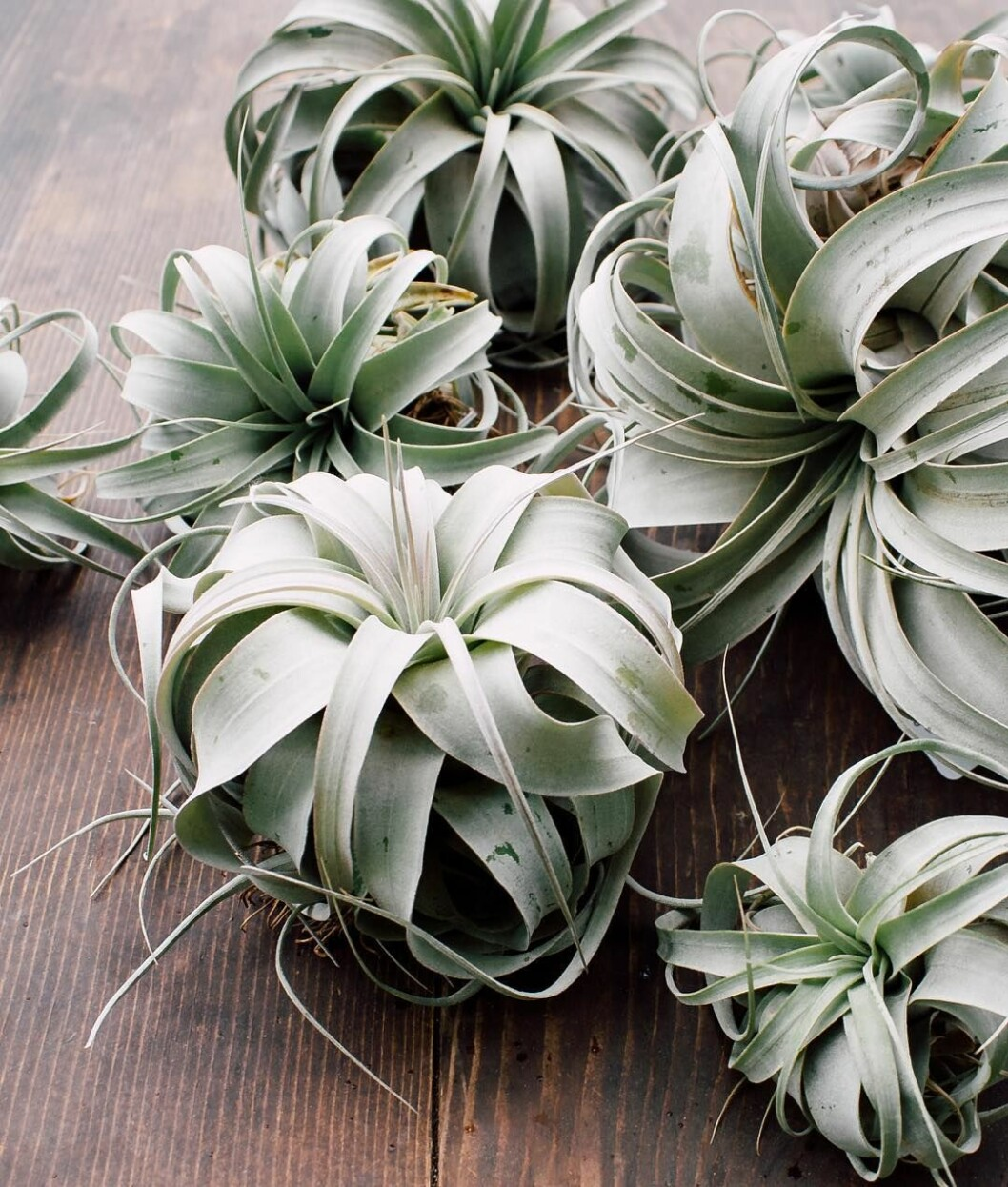 01. airplants