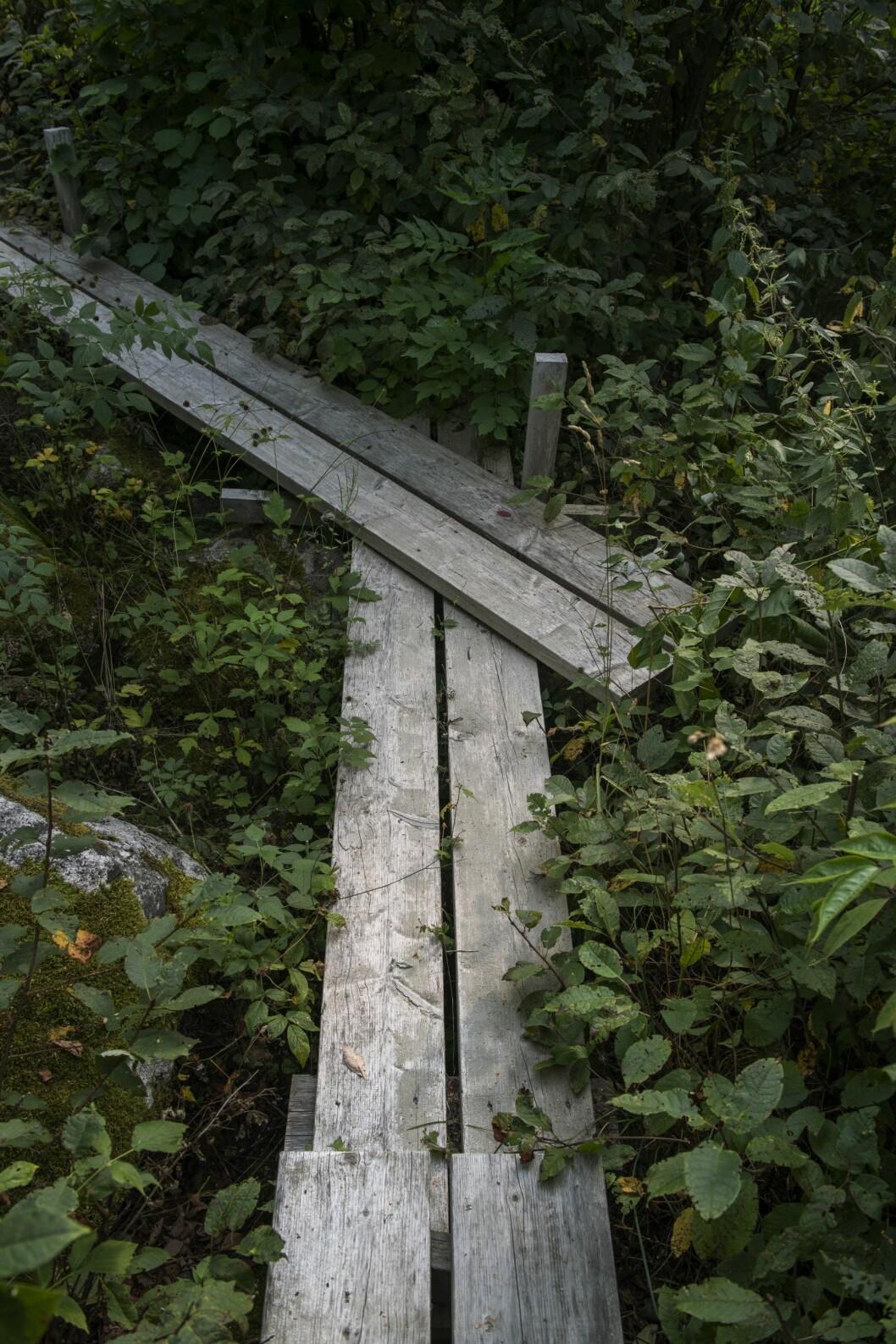 Spången som leder genom skogen till Mälaren.