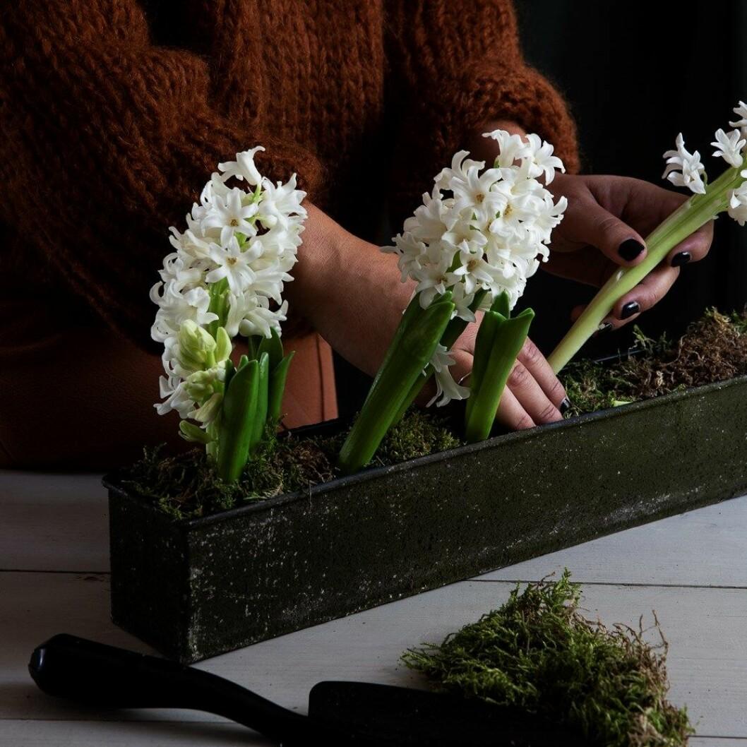 granit jul mossa hyacint