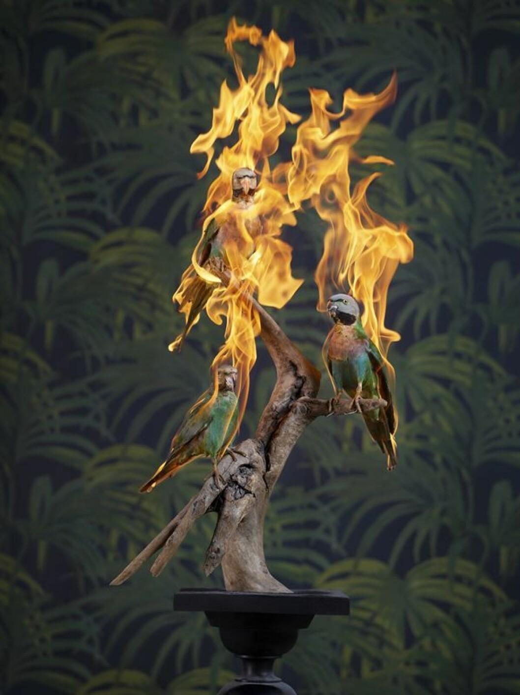 brinnande djur Fotografiska