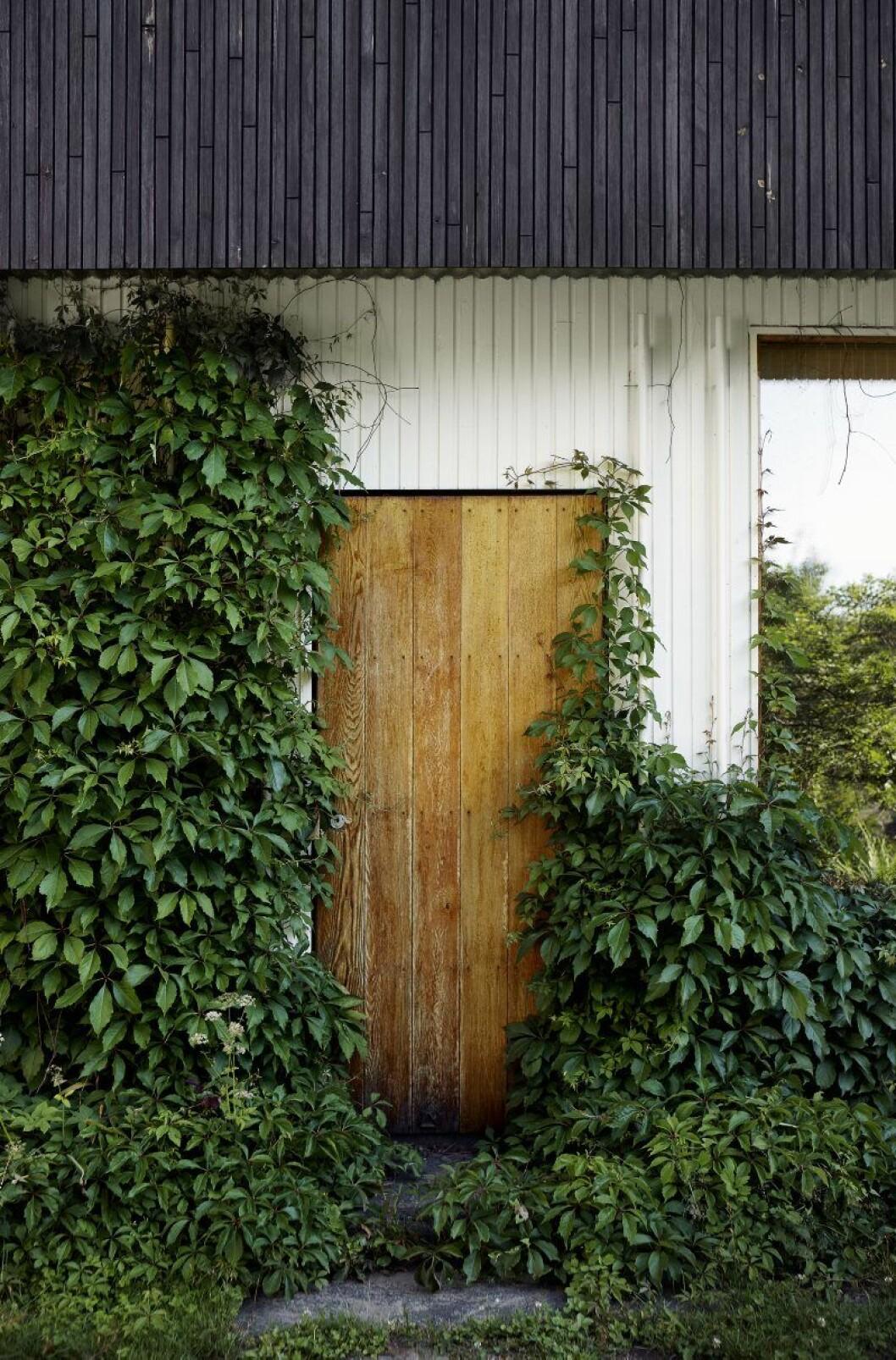 Dörren som leder från vardagsrummet ut till trädgården hemma hos Alvar Aalto