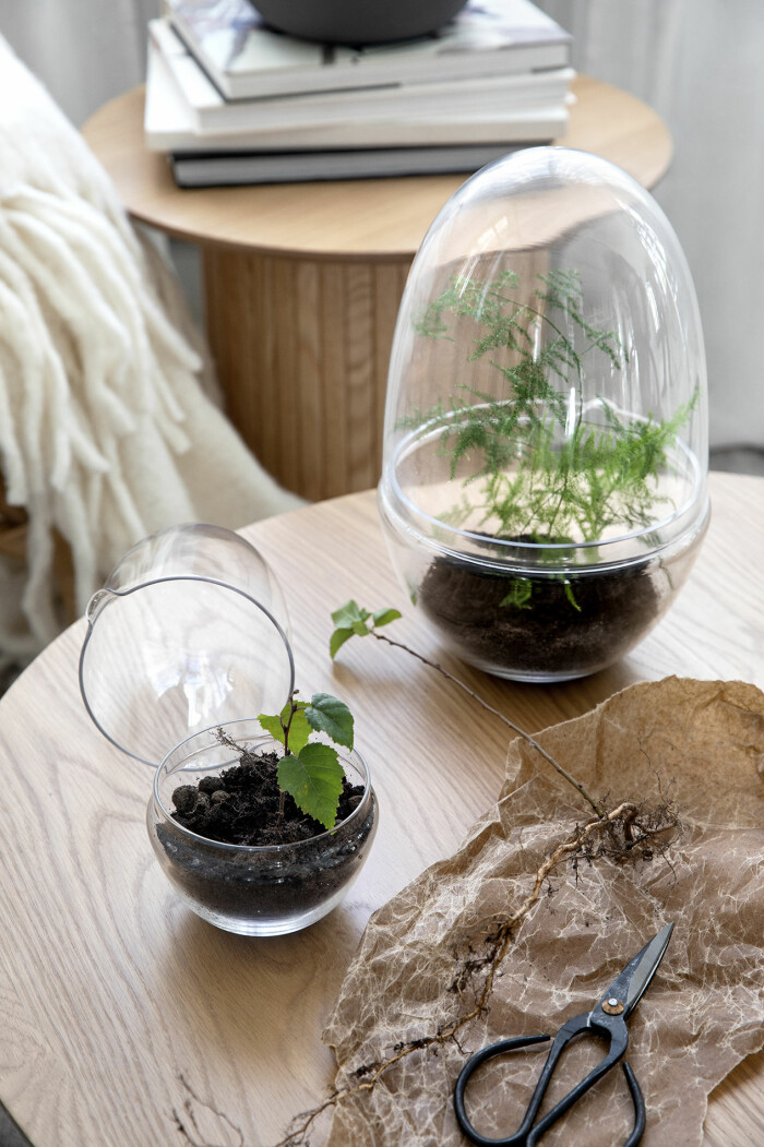 miniväxthus från åhléns våren 2021