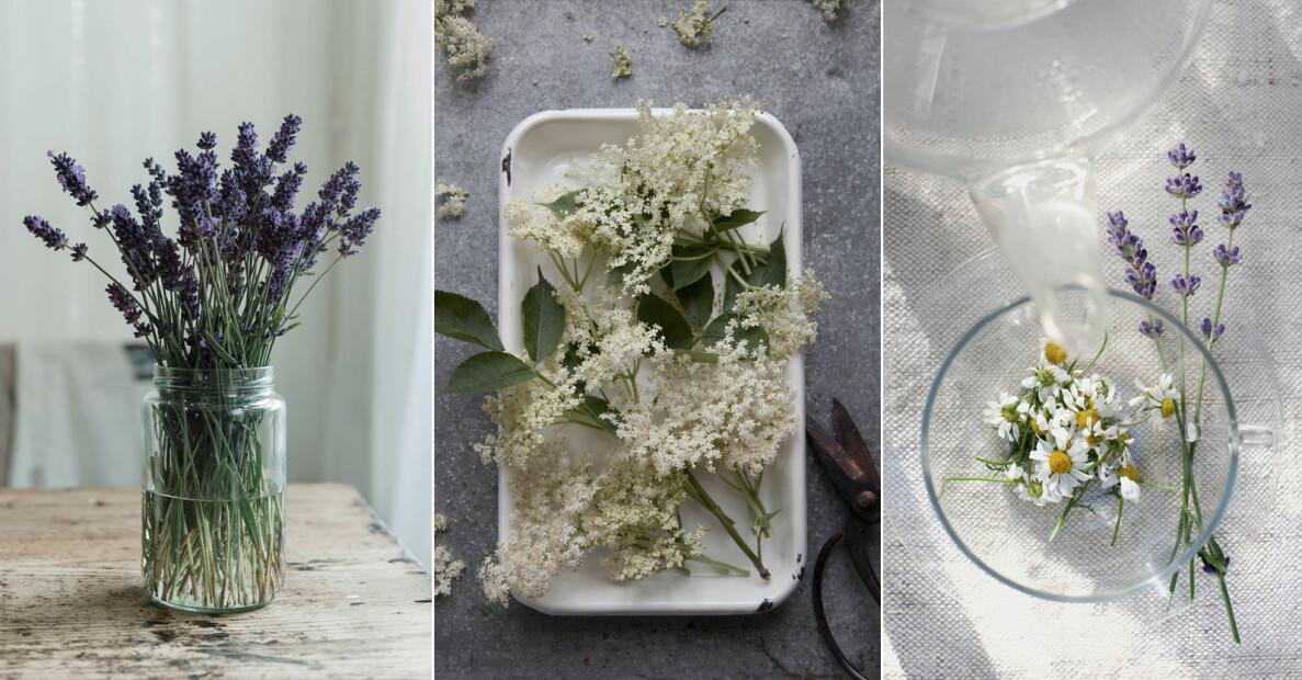 Residence tipsar om åtta ätbara blommor att plantera på balkongen, som viol och fläderS