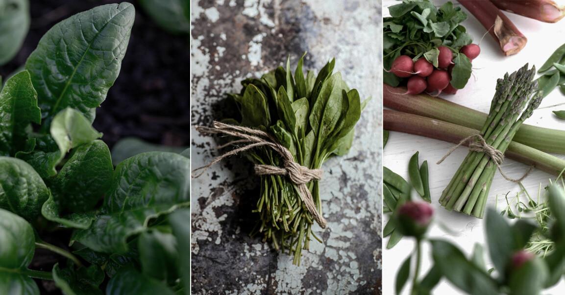 5 enkla grönsaker att odla i växthuset