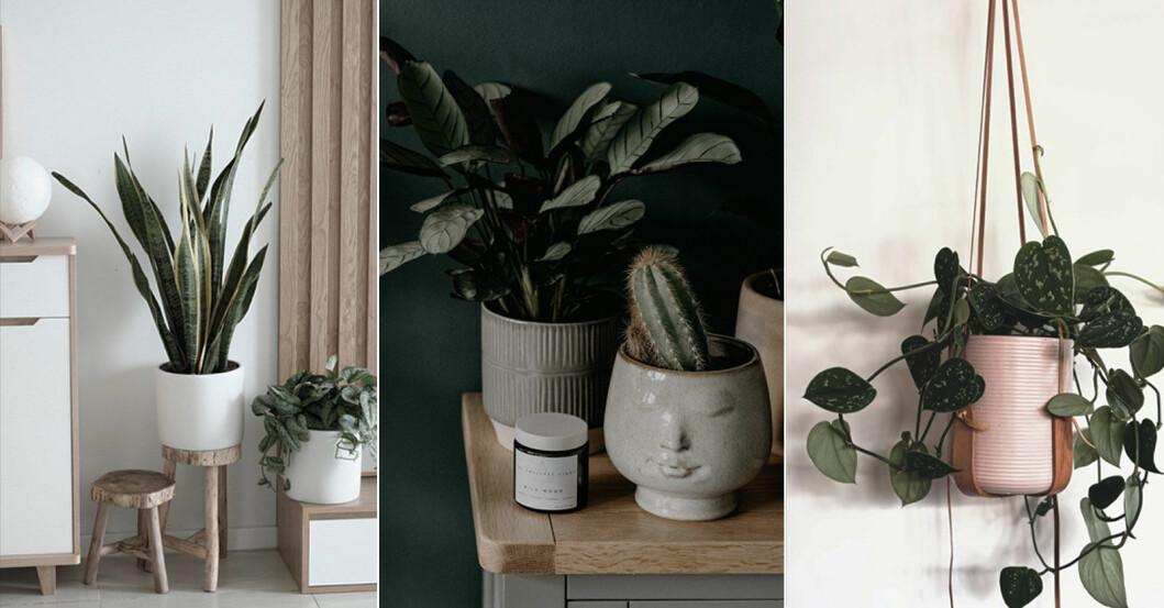 Så fräschar du upp dina växter 7 effektiva skötselråd