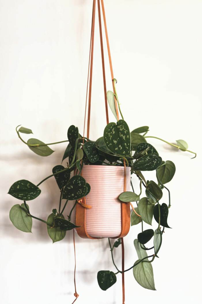 Så tar du bäst hand om dina krukväxter