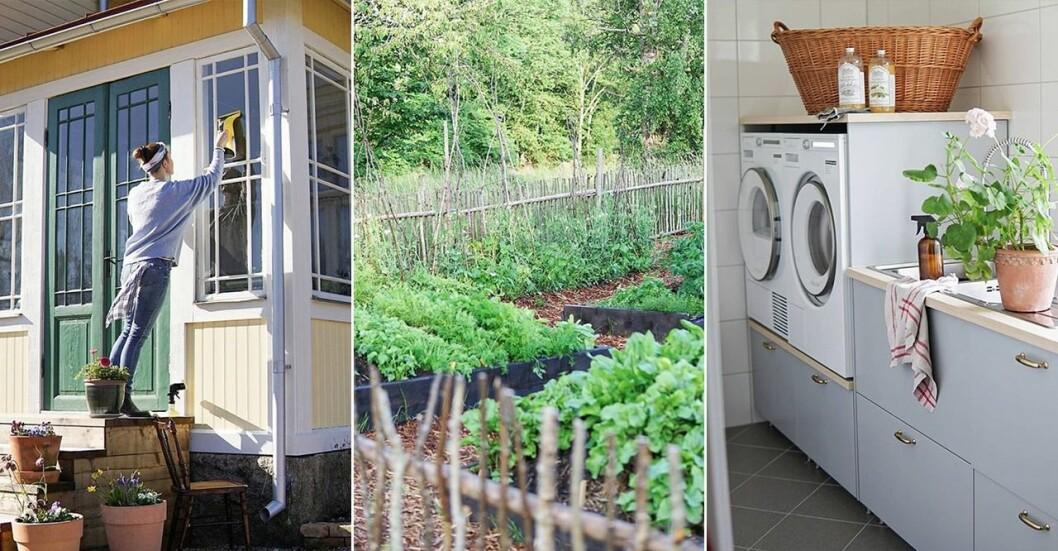 Lisa Petterson tvättar fönstren på sin sekelskiftesvilla, villans köksträdgård, villans tvättstuga.