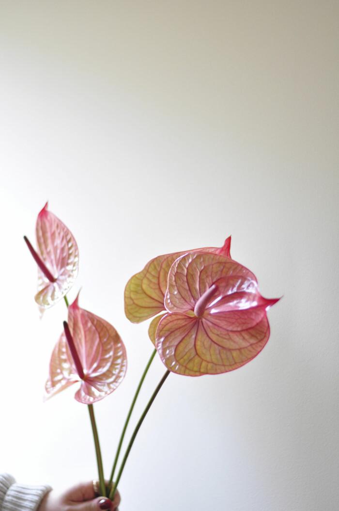 Blomtrender Sarah Angelsiöö Elle Decoration
