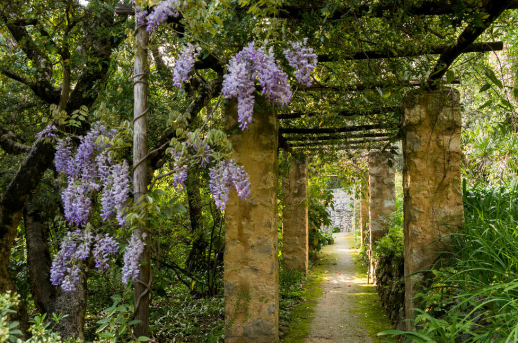 Pelargång i sydfranska trädgården Jardin de la Madone
