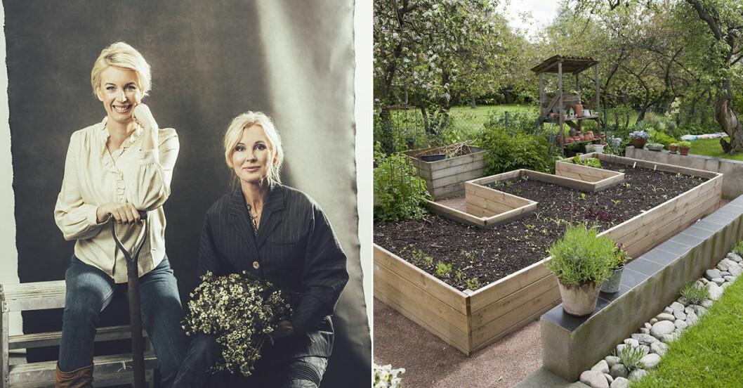 Röda vita rosen ny trädgårdspodd med Jenny Strömstedt och Victoria Skoglund.