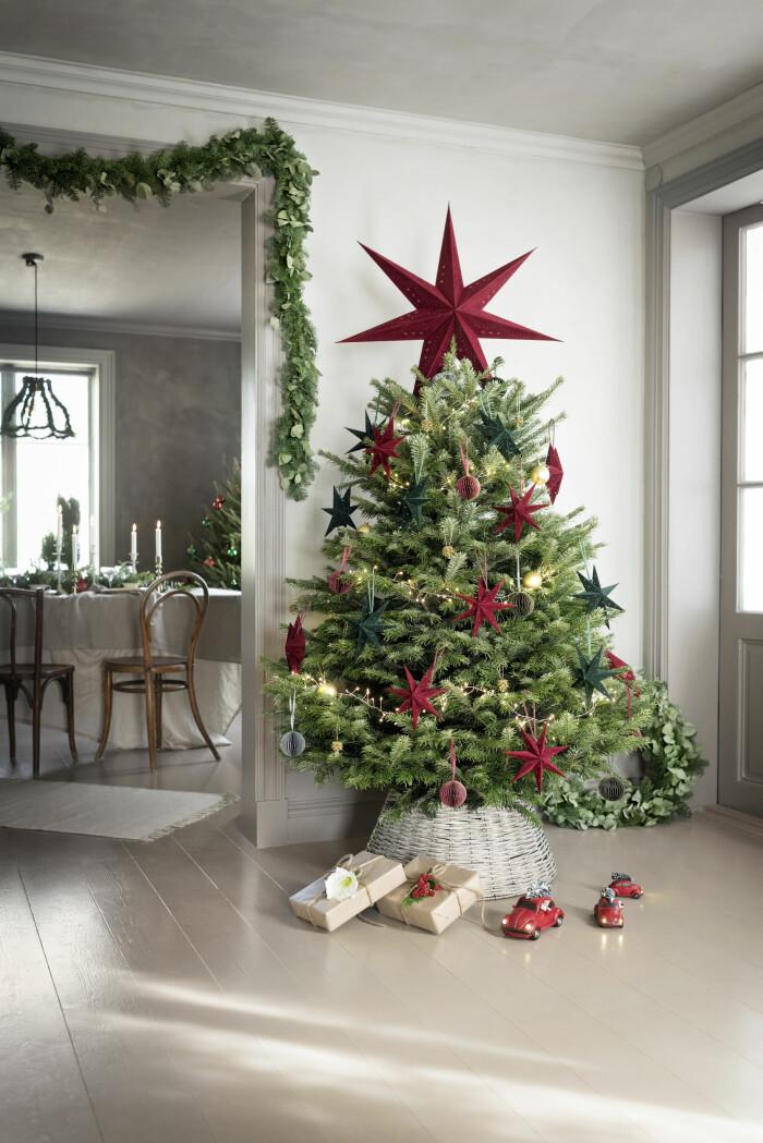 julgranen är en klassiker som står sig bland julens trendväxter 2020