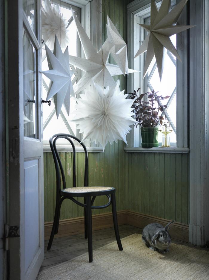 julstjärnor i vitt från Åhléns