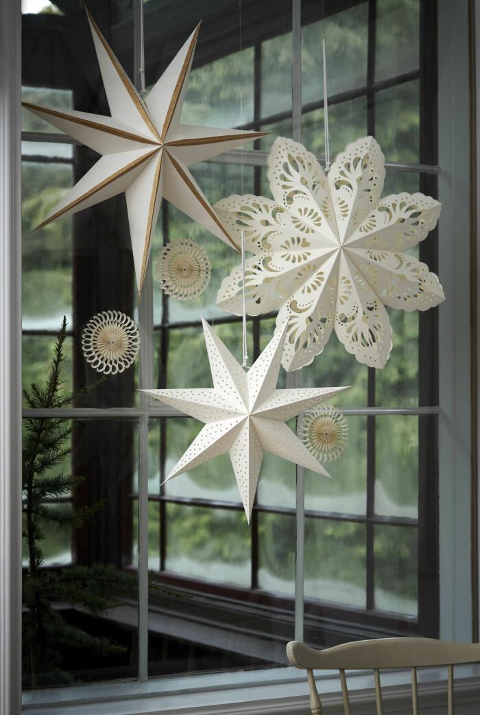 julstjärnor i vitt