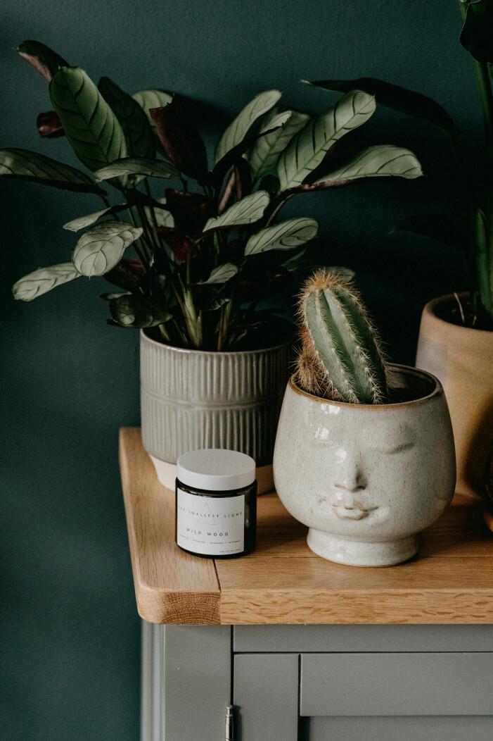 Så fräschar du upp dina krukväxter