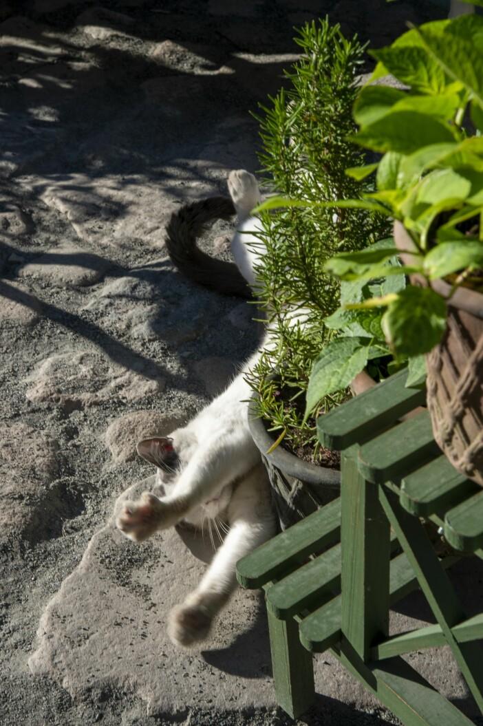 Hemma hos Karl Fredrik på Österlen katten