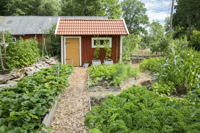 Skapa din egen köksträdgård