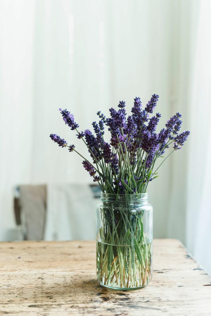 Lavendel är en ätbar blomma