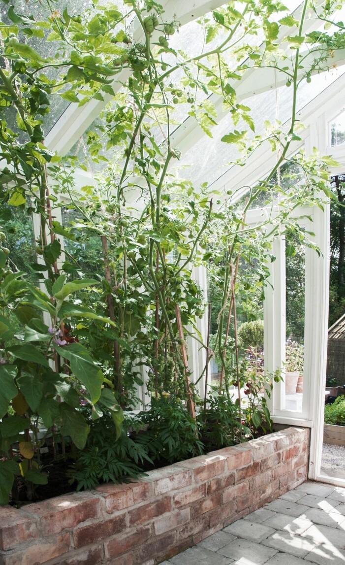 Så odlar du i växthus