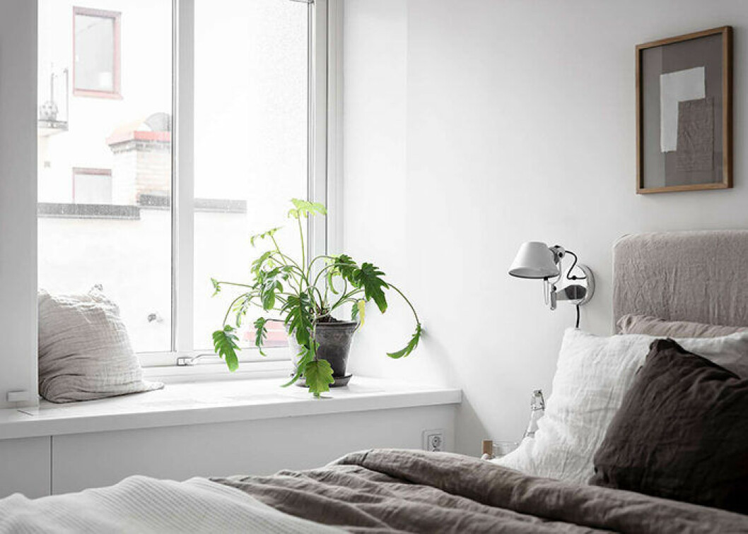 Inred med växter i sovrummet