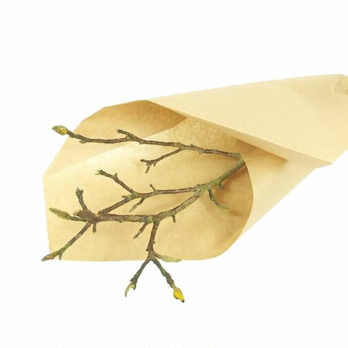 magnoliakvist
