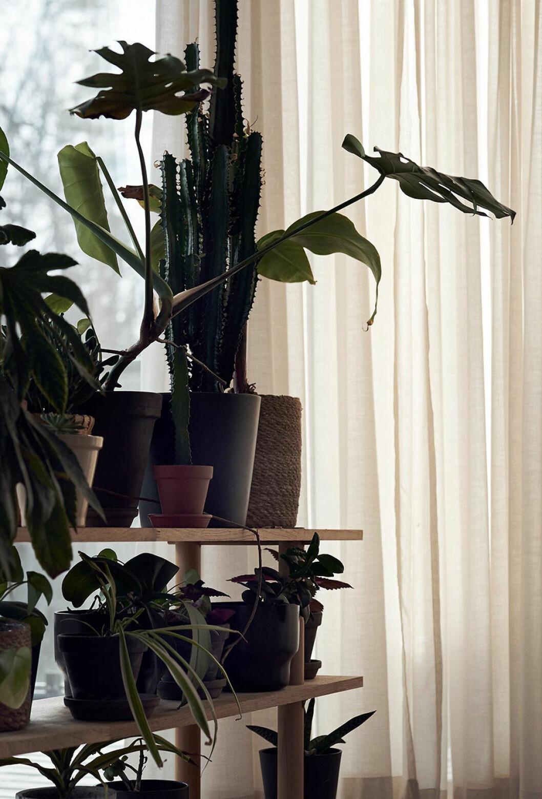 villa åkerman växter