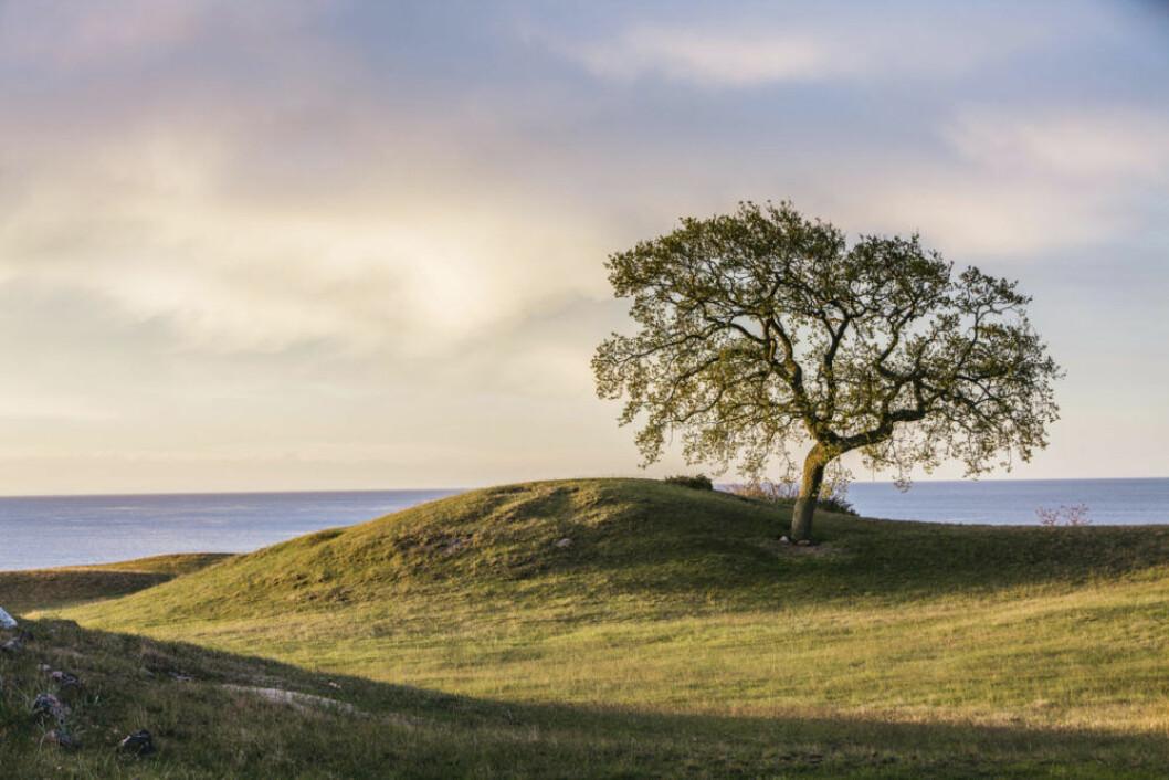 Bulligt landskap vid vackra Österlen.