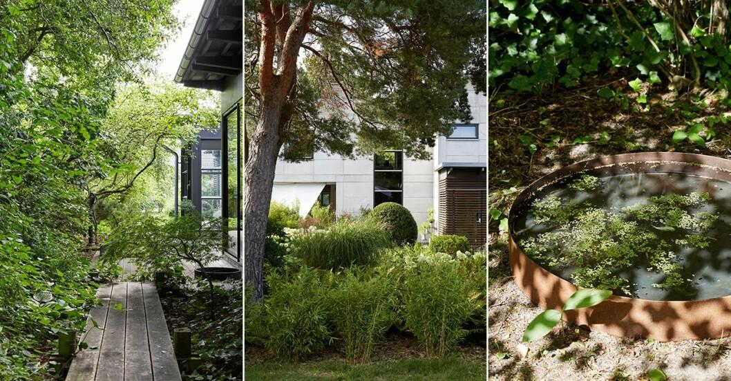 Susann Larssons gröna trädgård är en inspiration.