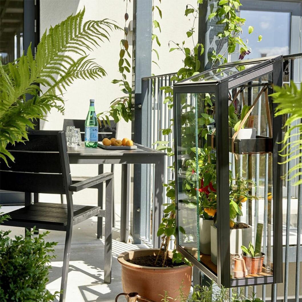 litet växthus till balkong 2020
