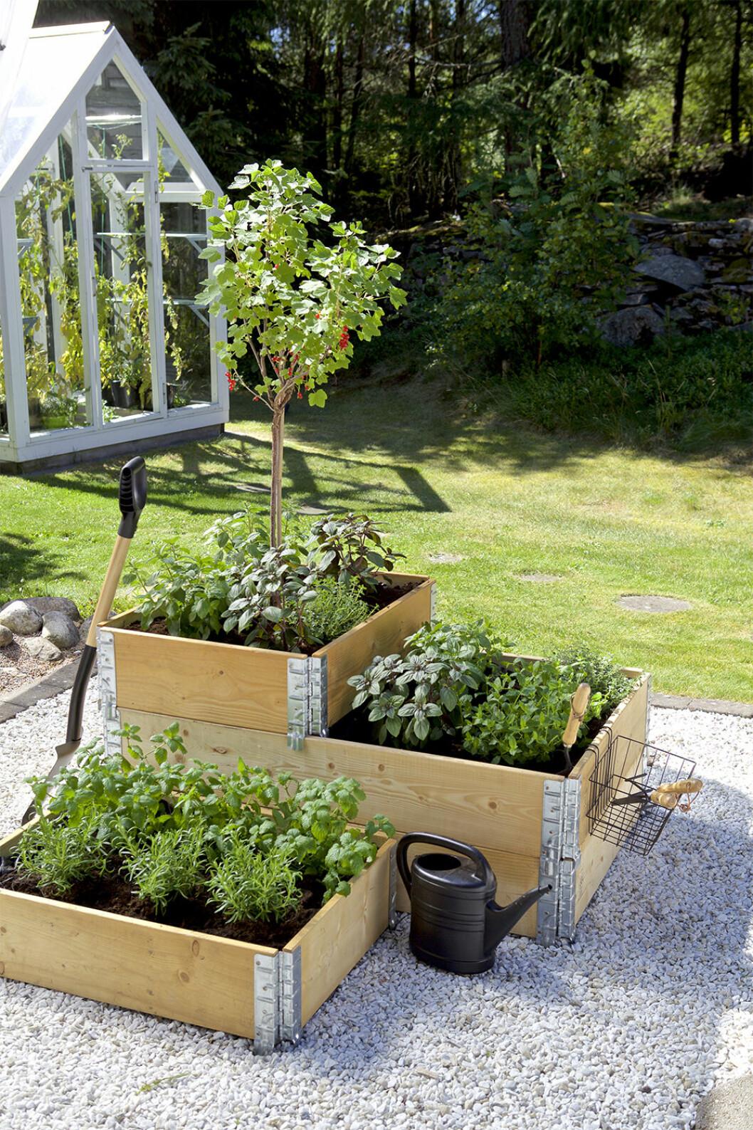 Vad kan man odla i pallkrage? Allt från bärbuskar till grönsaker!