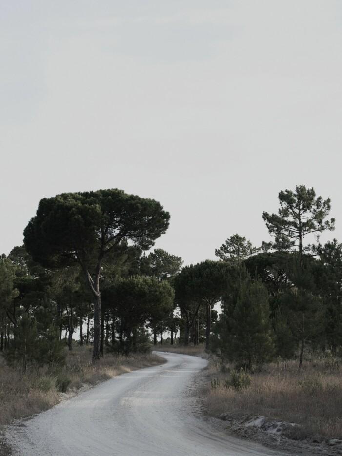 Vägen till huset