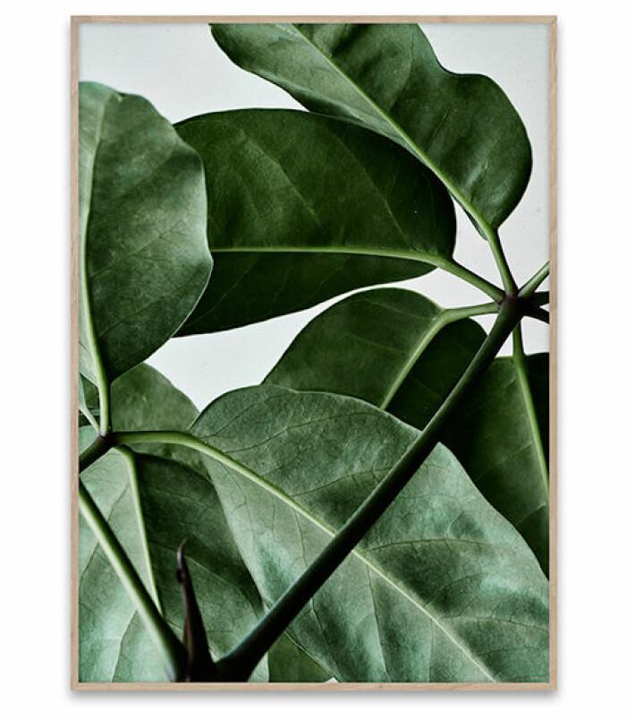 poster med gröna blad