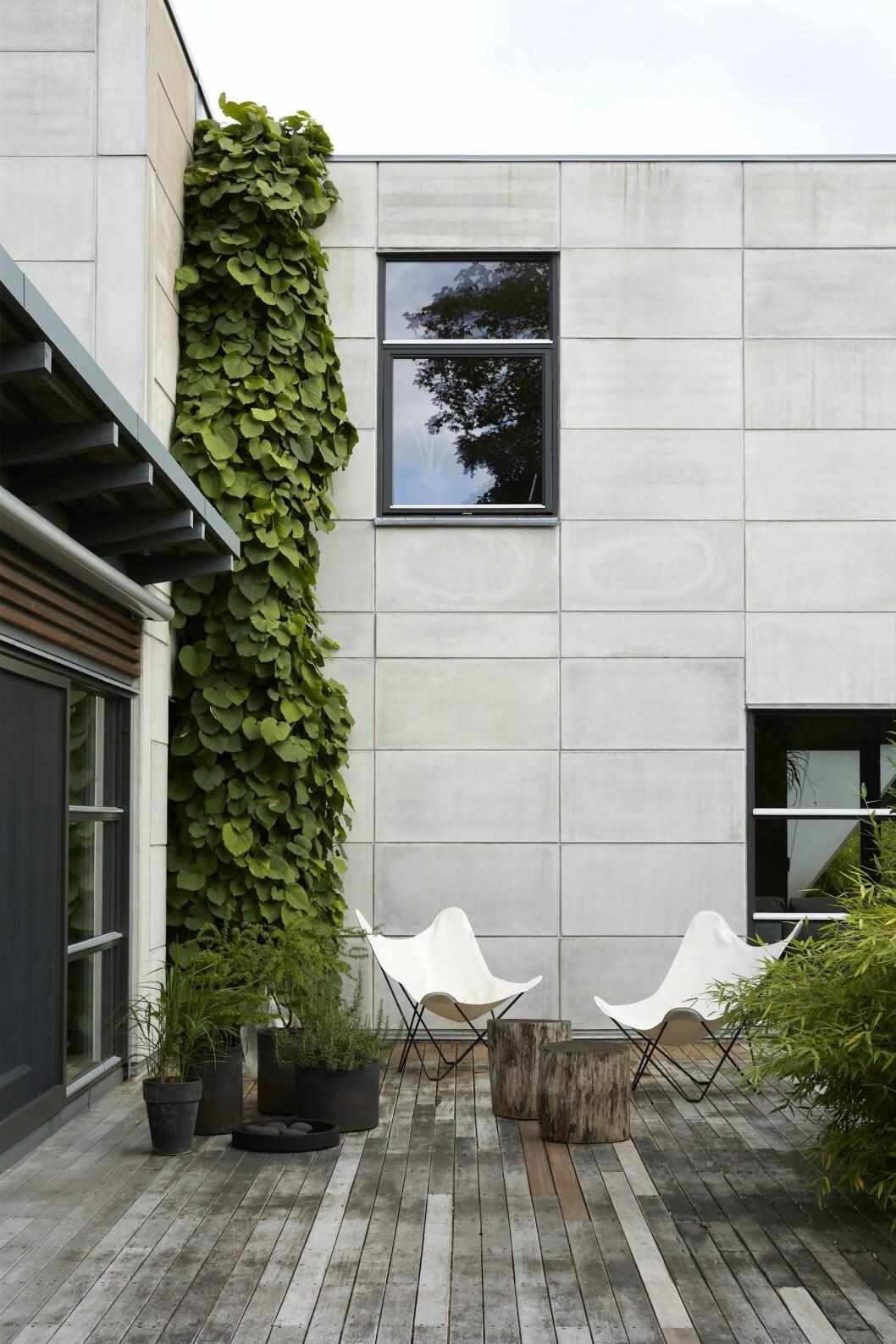 Pipranka klättrar på fasaden till husets utbyggnad.