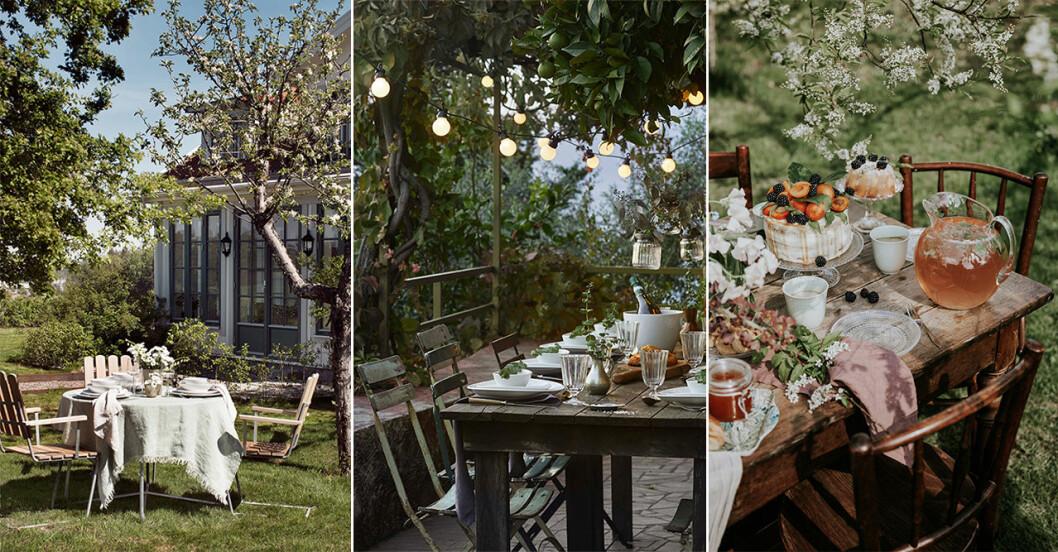 fest och middag utomhus
