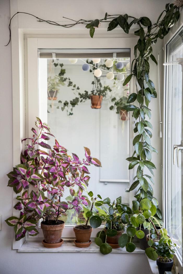 Så väljer du rätt växt till din växtgardin