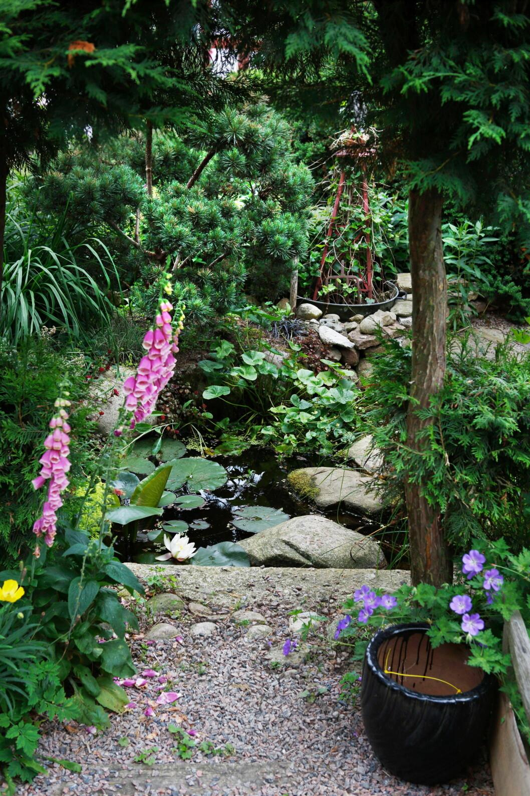 Anlagd damm i trädgård.