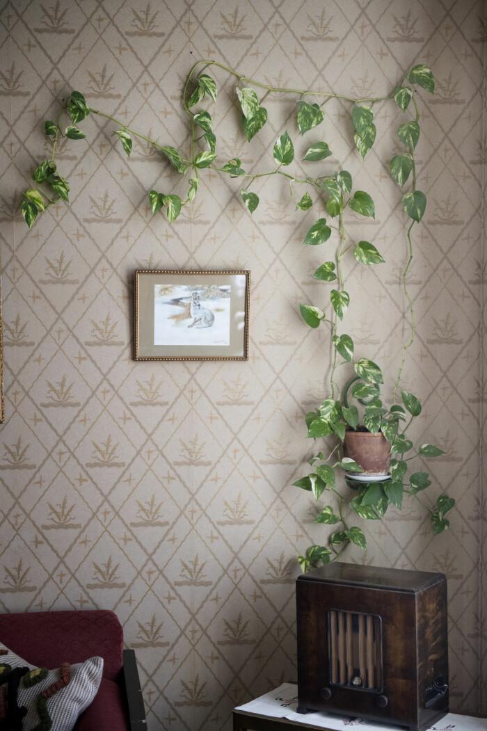 Växter höjer luftkvaliteten i dina rum.