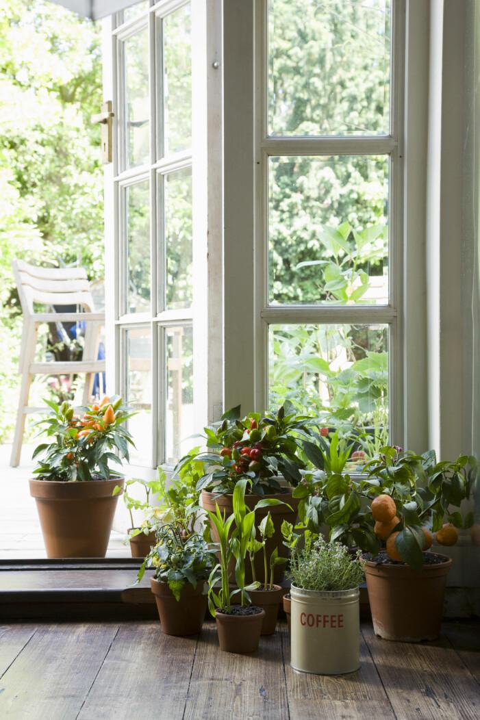 Krukor och växter i dörröppningen till altanen