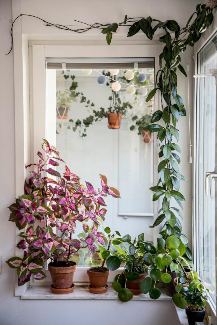 Så tar du hand om dina växter och blommor i sommar