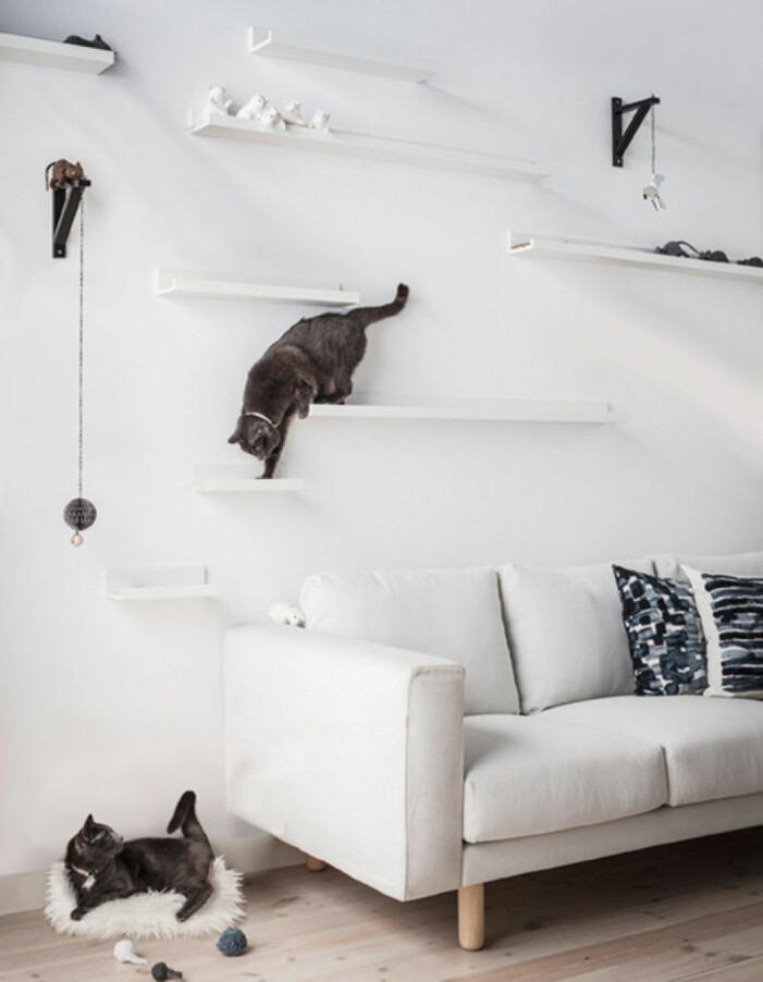 Skapa en klättervägg för katter