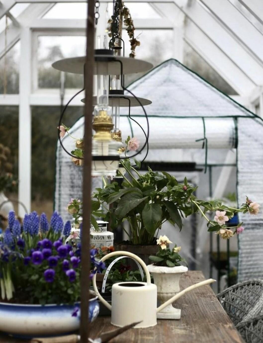 Hannas växthus från Skånska Byggvaror.