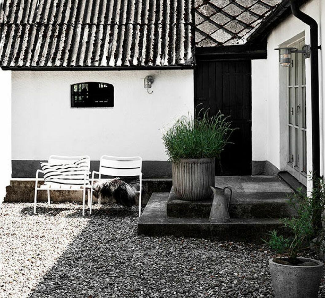 På Skånes mysigaste innergård prunkar lavendel och ett klotformat valnötsträd att dagdrömma under. Den svarta dörren leder in till det gamla stallet som ska integreras med boningshuset. Stolar, Ikea, stora krukan, House Doctor.