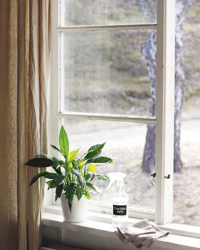 Städa med ättika, gör egen fönsterputs med ättika