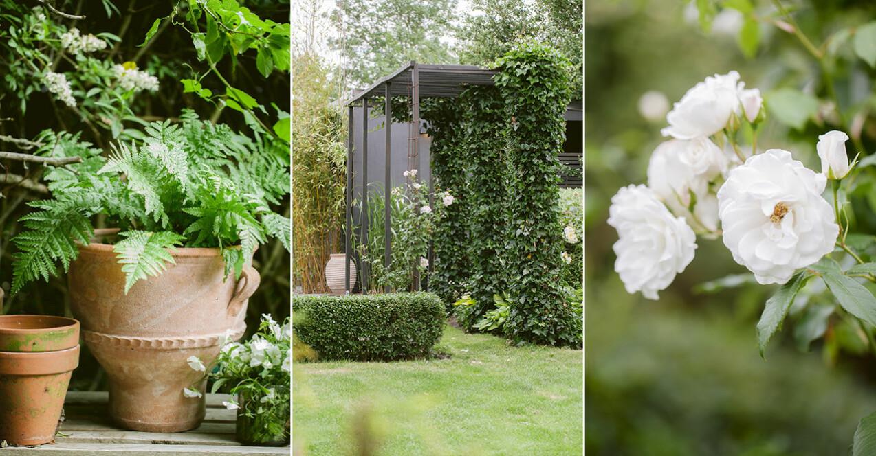 Trädgårdsinspiration i Lomma