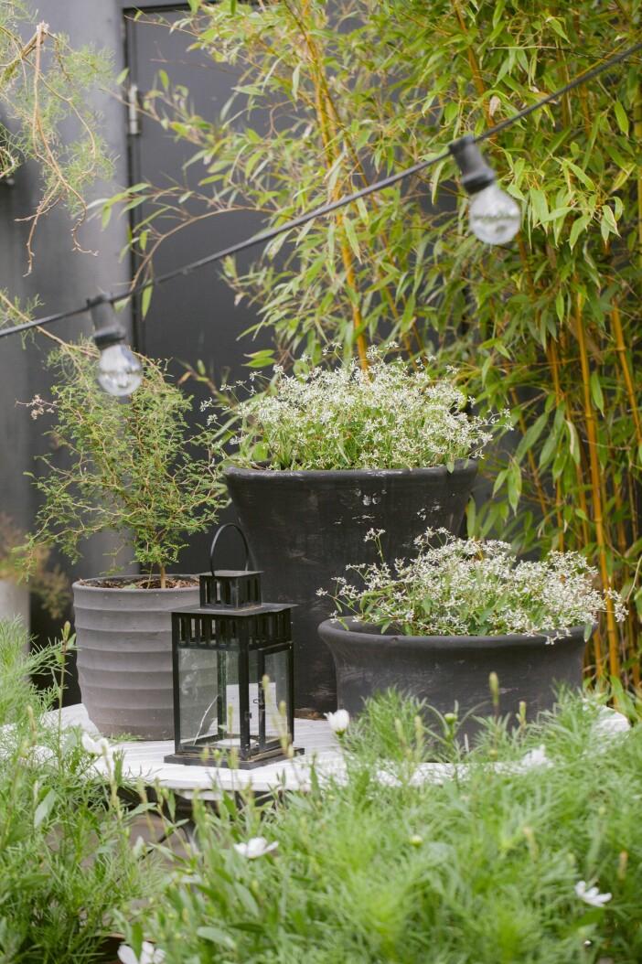 Trädgården i Lomma uteplats belysning krukor