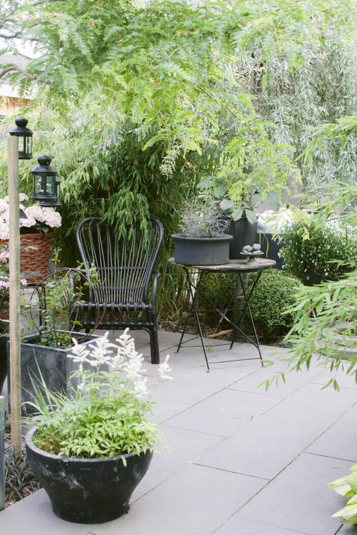 Trädgården i Lomma uteplats korgstol och krukor