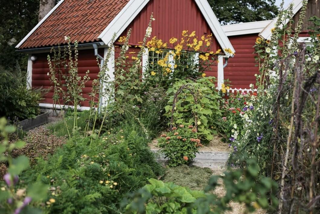 Tid för odling och uteliv nu när sommaren äntligen är här. Så lyckas du bäst - få inspiration och tips om redskap.