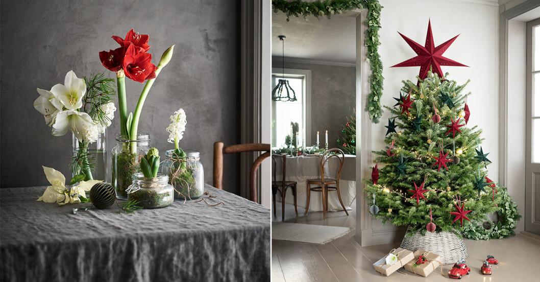 trendiga blommor och växter julen 2020