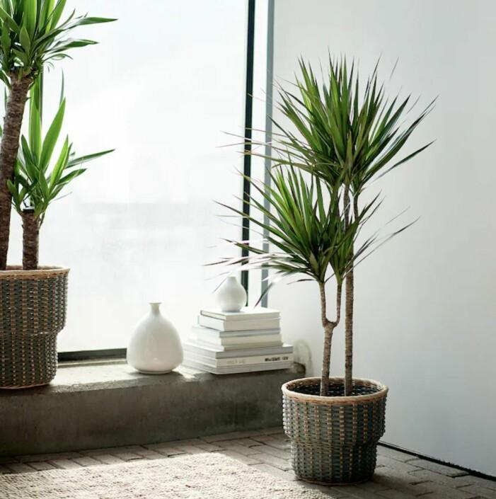 Trendige Zimmerpflanzen 2021