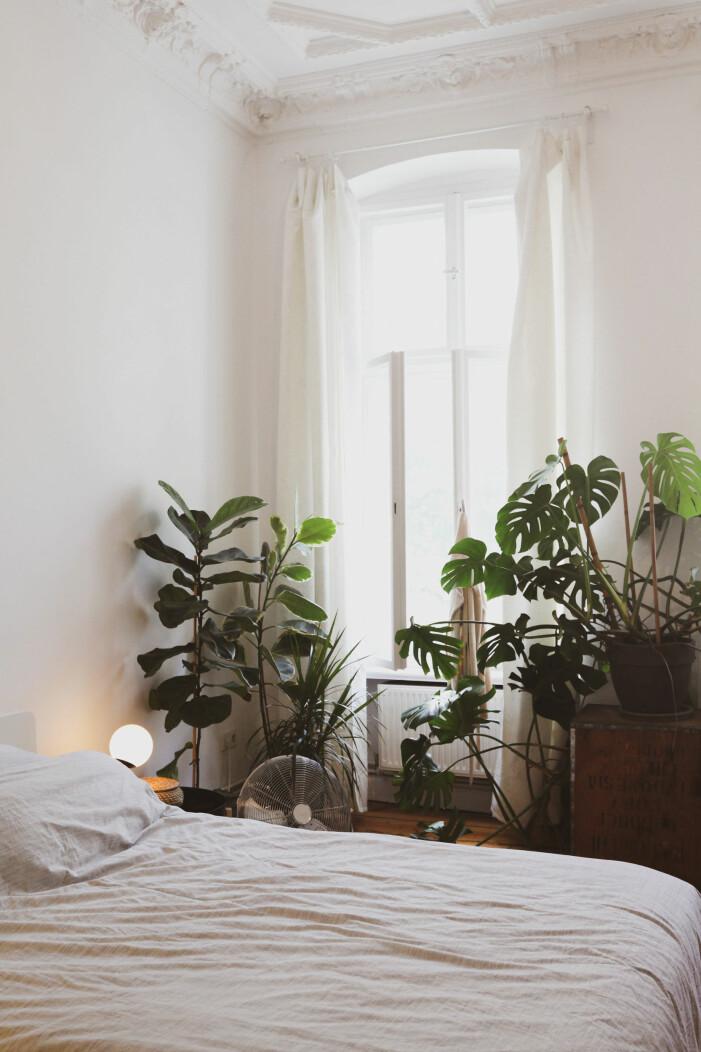 Trendige Zimmerpflanzen im Herbst 2021, monstera