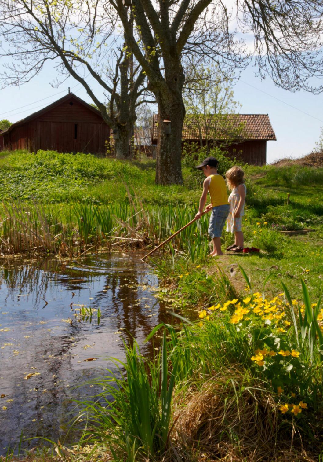 Trädgård damm barn